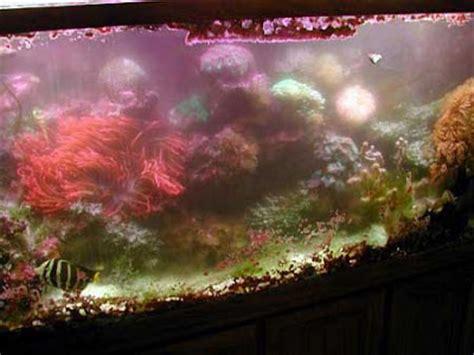 comment cuisiner les algues les algues dans l aquarium marin et r 233 cifal 28