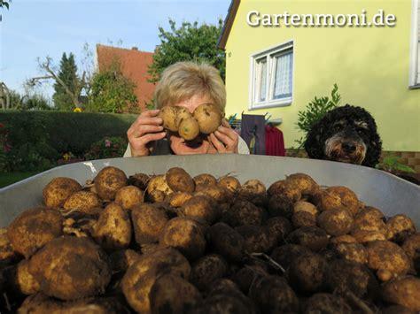 Kartoffeln Im Garten Pflanzen Und Ernten