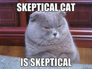 skeptical cat is skeptical memes | quickmeme
