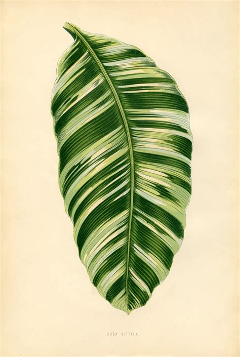 vintage printable gorgeous leaf botanical