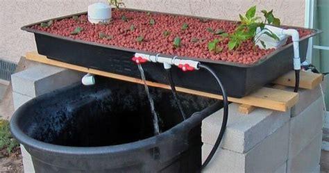 diy beginner aquaponics projects aquaponics backyard