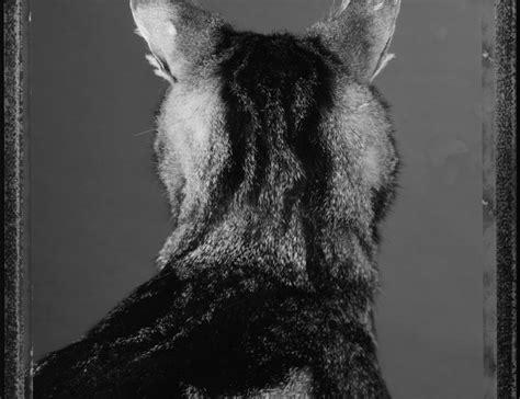 maison europeenne de la photographie le chat et ses photographes maison europ 233 enne de la photographie