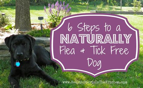 steps   naturally flea tick  dog eco snippets