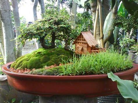 สวนถาด เหงือกปลาหมอ - ร้านฅนรักไม้ดัด | ตกแต่งสวน, สวนจิ๋ว ...