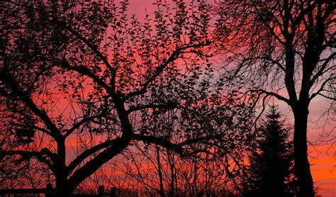 images tree branch winter sunrise sunset