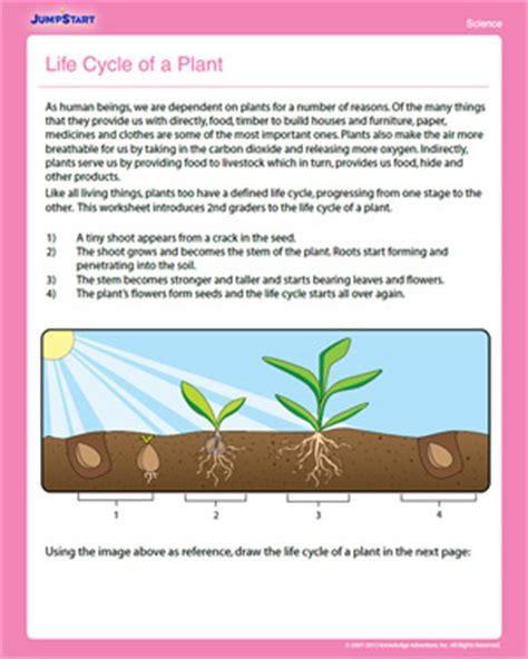 cycle of a plant free 2nd grade science worksheet