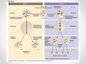 2n 6 Meiosis Diagram