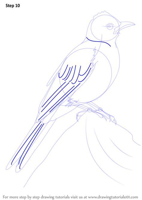 learn   draw  common bulbul birds step  step