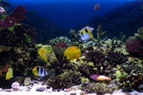 algen hauswand entfernen hausmittel algen hauswand entfernen hausmittel algen auf fassade entfernen hausmittel h user immobilien