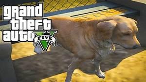 GTA 5 Mods - Golden Retriever Mod! GTA V Chop The Dog Mod ...