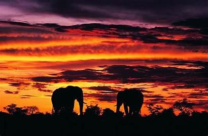 Africa Widescreen Wallpapers Baltana Resolution