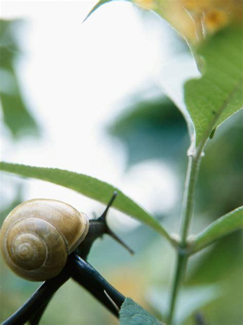 kitchen remedies banish garden pests hgtv