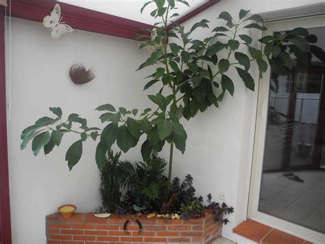 plantes de bureau plantes de bureau sans soleil finest les plantes sans