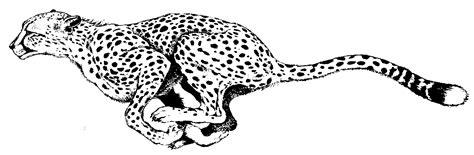 running cheetah painting drawings  cheetah