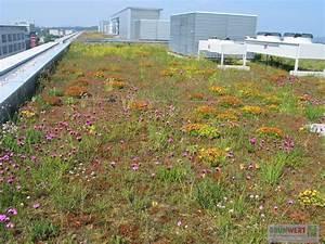 Extensive Dachbegrünung Pflanzen : extensive dachbegr nung gr nwertgr nwert ~ Frokenaadalensverden.com Haus und Dekorationen