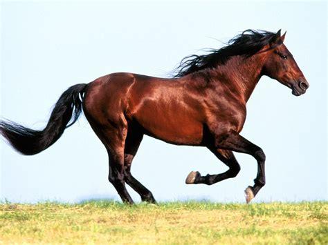 horses faithful friends