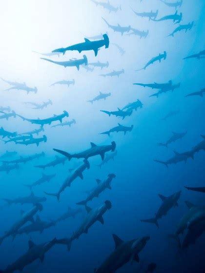 places  swim  sharks conde nast traveler