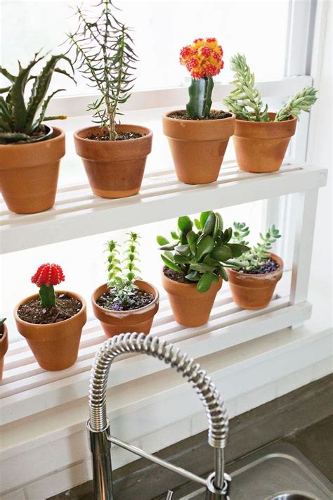 Small Plants For Kitchen Window by 25 Best Ideas About Plant Shelves On Cultivo