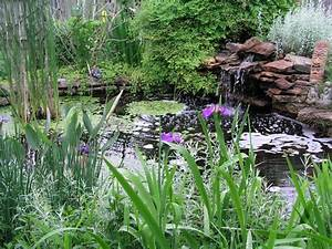 8 Things to Consider Before You Install a Pond: Water