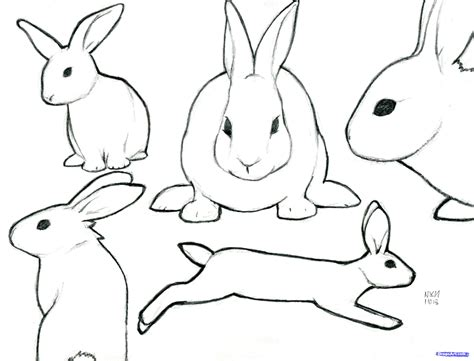 rabbit step  forest animals   drawing easy