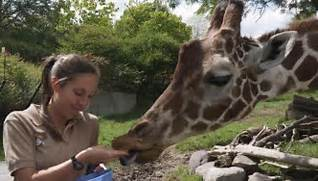 http://bewildero.us/how-to-become-a-zoologist-in-the-usa.html
