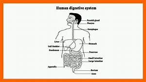 Human Digestive System In Hindi