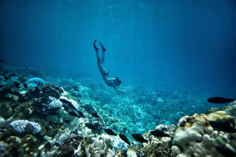 snorkeling and scuba hawaii island go hawaii
