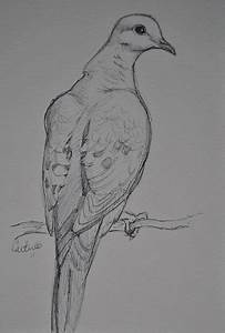 25+ best ideas about Dove drawing on Pinterest | Mlk 2015 ...