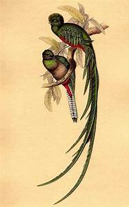 41 best images about Quetzal on Pinterest