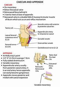 Instant Anatomy - Abdomen - Areas  Organs - Bowel