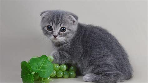 full hd wallpaper cat grape sight sad desktop backgrounds