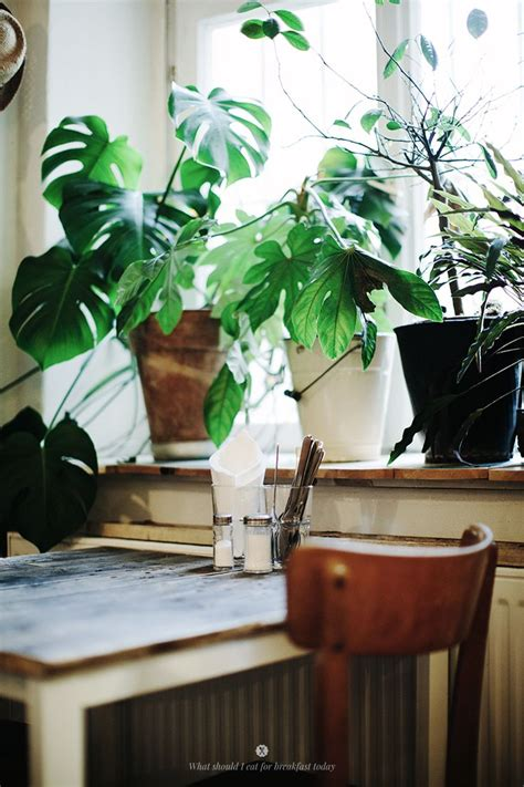 Best Indoor Window Sill Plants by 21 Best Fvf City Guide Architectural Berlin Images On