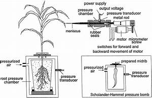 Direct Measurement of Xylem Pressure in Leaves of Intact ...