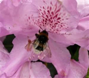 Kleine Fliegen In Blumen : tiere im stadtpark hamburg ~ Lizthompson.info Haus und Dekorationen