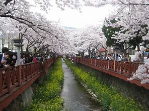 92 best Korea scenery images on Pinterest