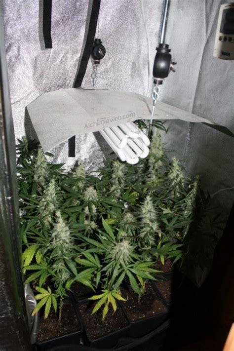 fabriquer chambre de culture cultiver du cannabis avec des les basses consommation