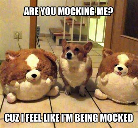 Fat Dog Meme - 33 all time best funny dog pictures with captions