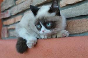 Cat Pictures | Cute animal pictures and videos blog - Part 3