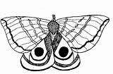 Moth Coloring Designlooter Butterflies sketch template