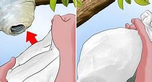 Se Débarrasser Des Guepes : 3 mani res de tuer les puces dans votre maison ~ Melissatoandfro.com Idées de Décoration