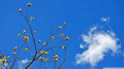Sky Flowers Yellow Background Wallpapers Desktop Ultrahd