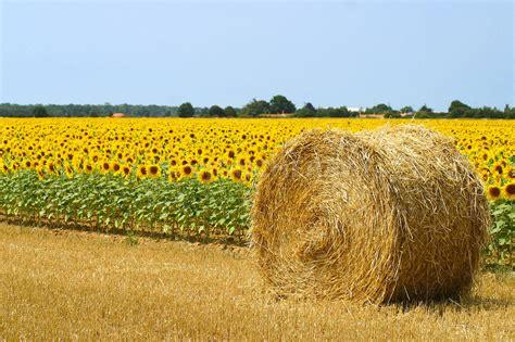 chambre d agriculture is e profil de chambres d 39 agriculture miimosa
