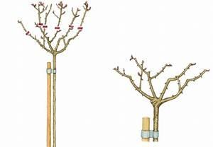 Wann Schneidet Man Rosen Zurück : rosen schneiden in 4 schritten obi anleitung ~ Orissabook.com Haus und Dekorationen