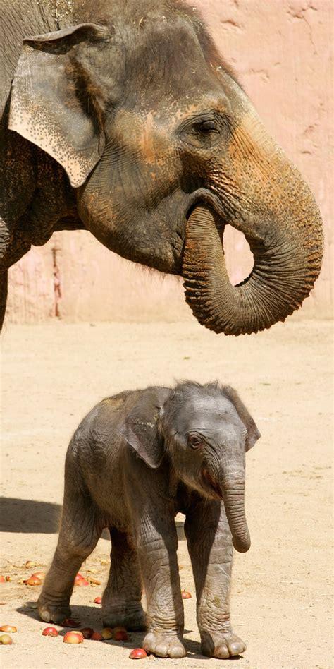 baby elephant    hours  popsugar pets