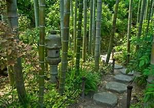 Bambus Pflege Zimmerpflanze : bambus bambuspflanzen bambusarten ~ Frokenaadalensverden.com Haus und Dekorationen