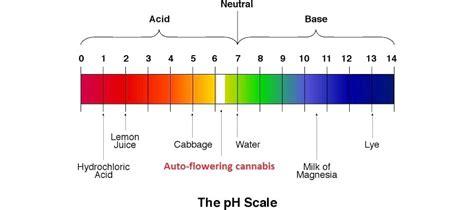 ph wert farben the ph value for a cannabis plant rqs
