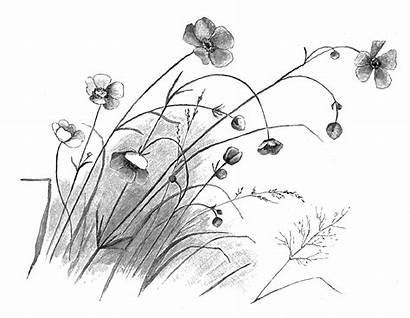 Flower Drawing Sketch Illustration Artwork Digital Sweet