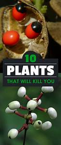 10 Plants That Will Kill You