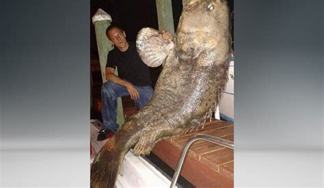 grouper dead lb found wfaa