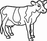 Cow Coloring Printable Cattle Easy Drawing Farm Face Adults Animal Colouring Sheets Animals Getcolorings Strange Coloringbay Pdf Getdrawings Clipartmag Colorings sketch template